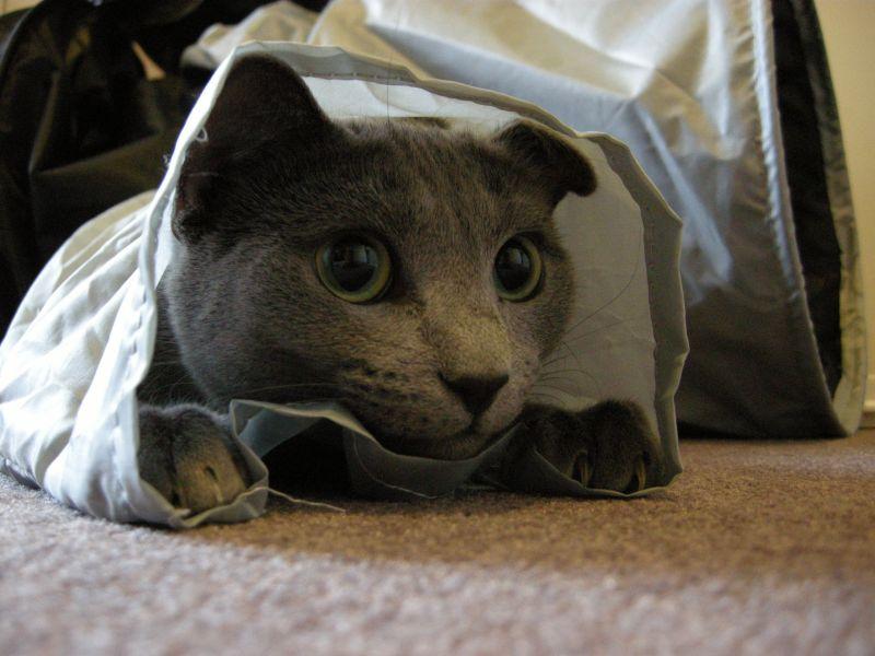 matériel agility pour chat