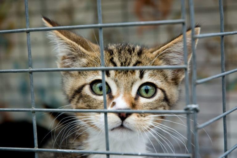Adopter Un Chaton Elevage Animaleries Ou Annonces Magazine Zooplus