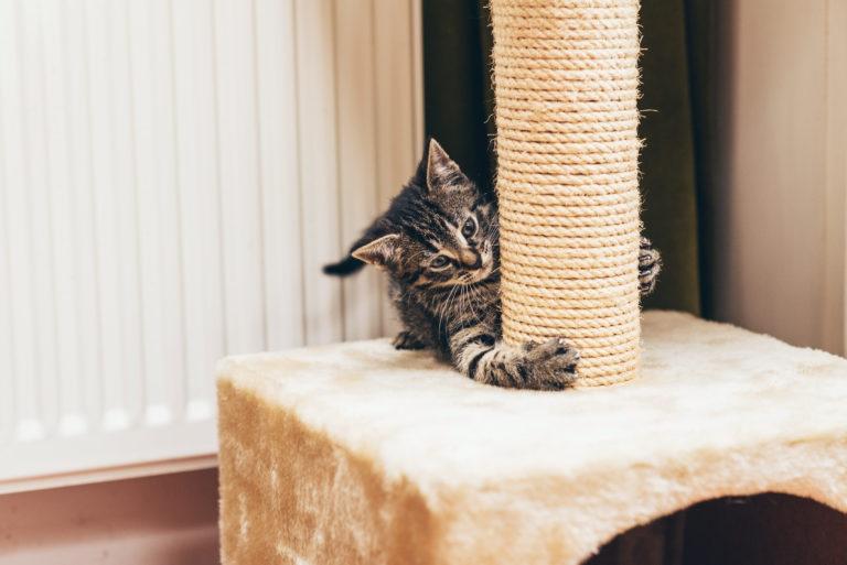 meubles à gratter pour chat