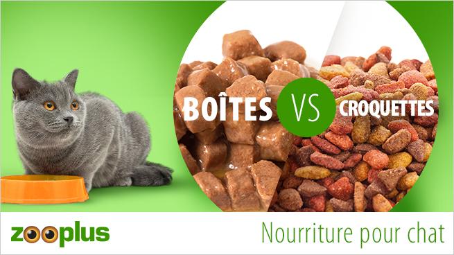 boîtes ou croquettes pour chat