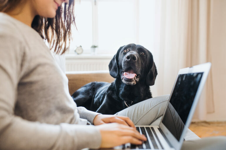 Une femme travaille et son chien la regarde