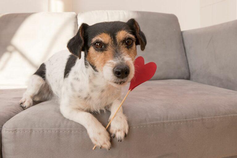 Saint-Valentin-pour-chien