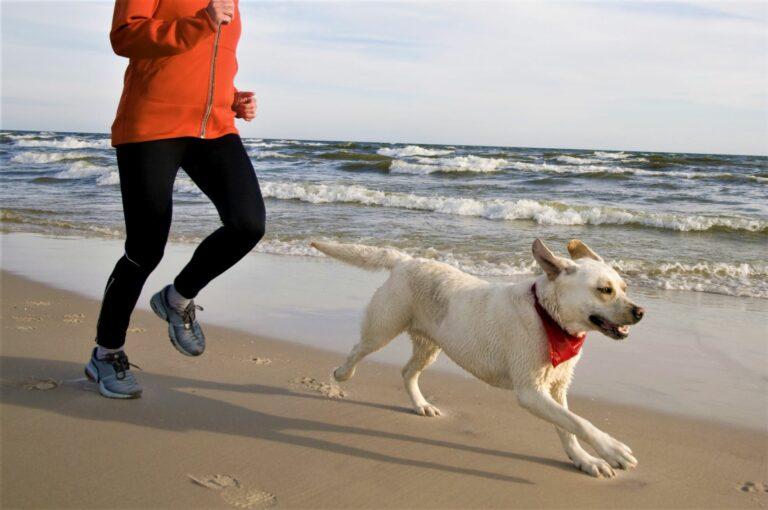 Joggen-mit-Hund-768×510