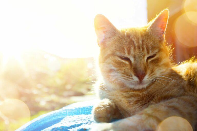 Katze-liegt-in-der-Sonne-768×512
