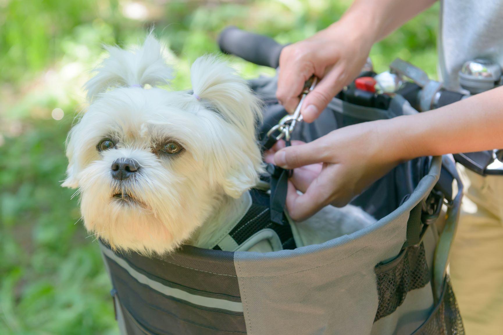 Hund im Hundekorb am Fahrrad
