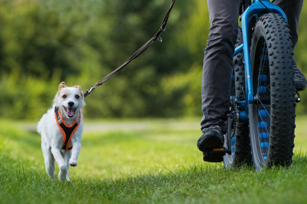 Velofahren mit Hund