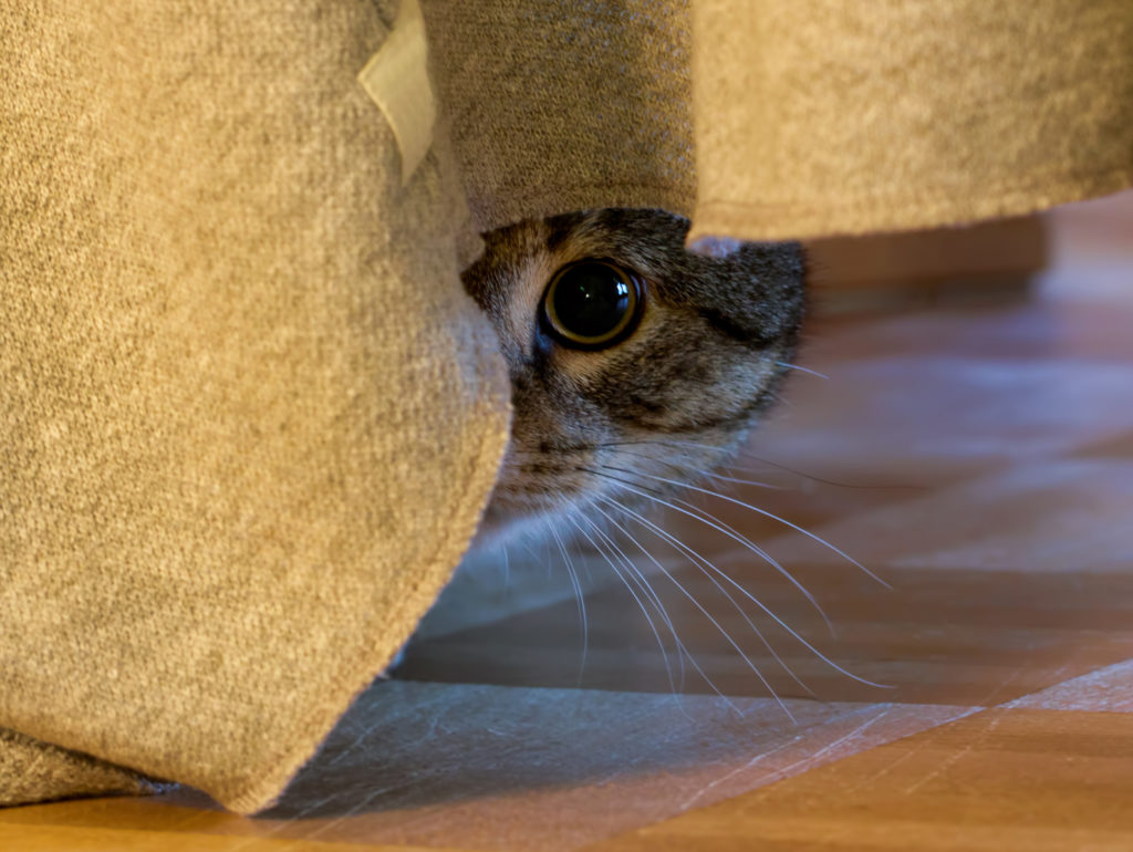 Ängstliche Katze unter Couch