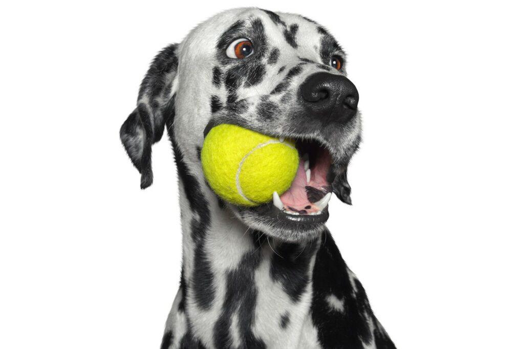 Lek rätt med hunden