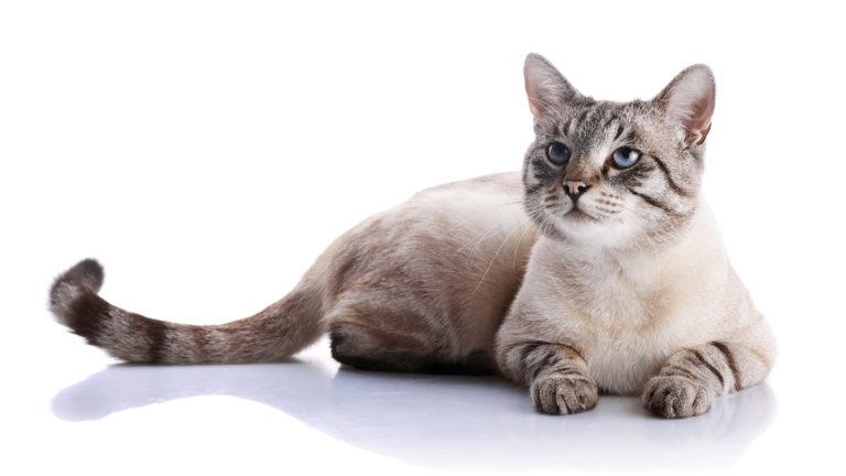dauer rolligkeit katzen