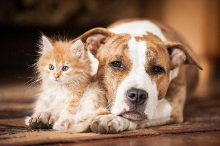 Katze und Hund aneinander gewöhnen