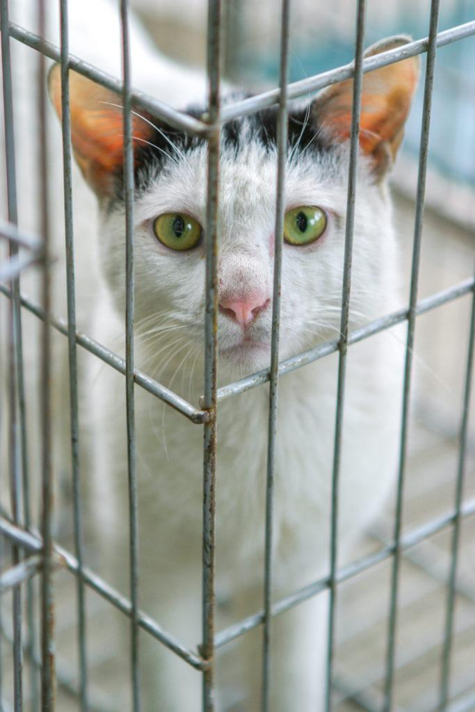 Wo Kann Man Katzen Kaufen Katzenhaltung Zooplus Ch