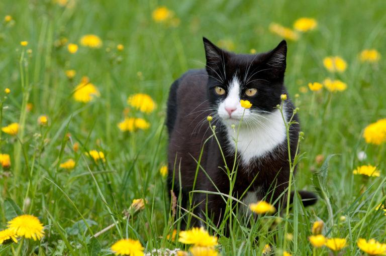 Zecken bei Katzen mit Freigang