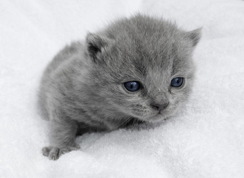 vorsorge für kitten