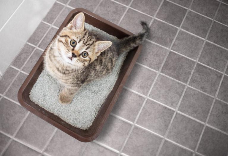 kitten im katzenklo schaut nach oben in die kamera