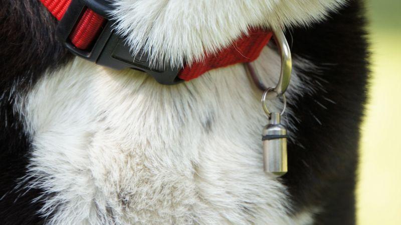 Ein Anhänger, der an einem Hundehalsband befestigt ist