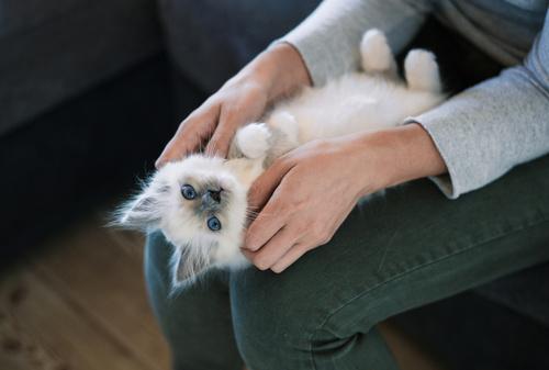 Kitten eingewöhnen – Grundausstattung und Tipps
