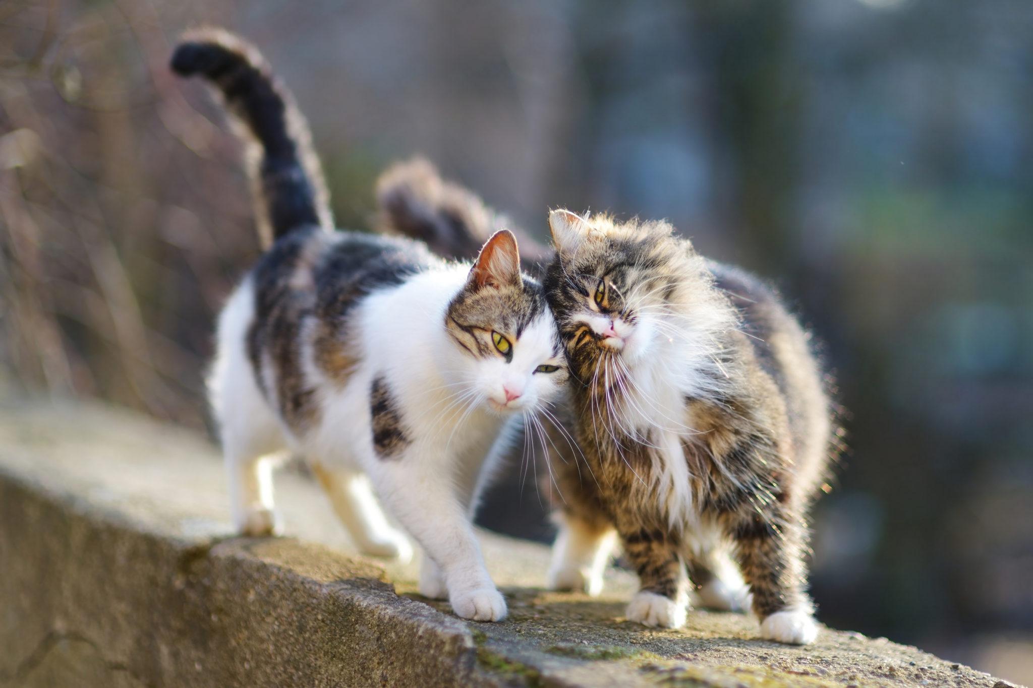 Kastration oder Sterilisation bei Katzen