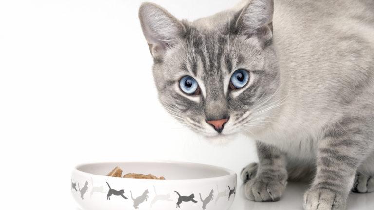 Kissanruokaa aikuiselle kissalle