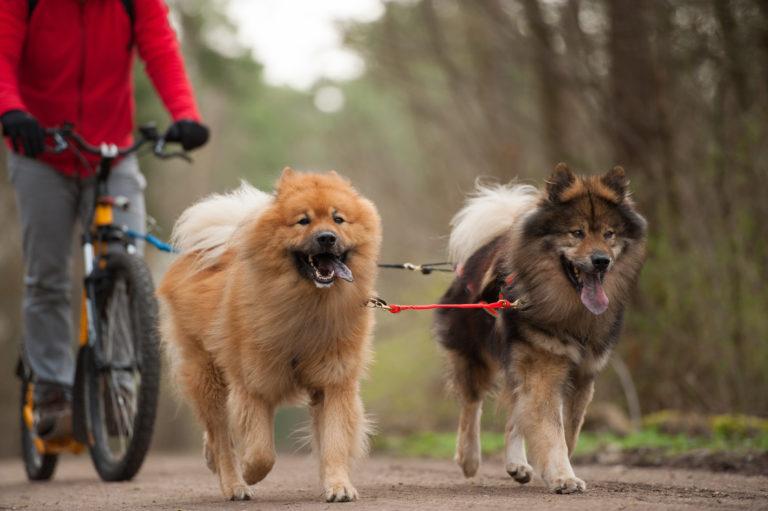 2 Hunde laufen neben Fahrrad