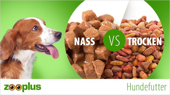 Hundetrockenfutter vs Nassfutter