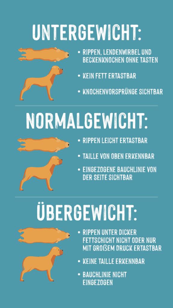 Infographik Gewicht bei Hunden