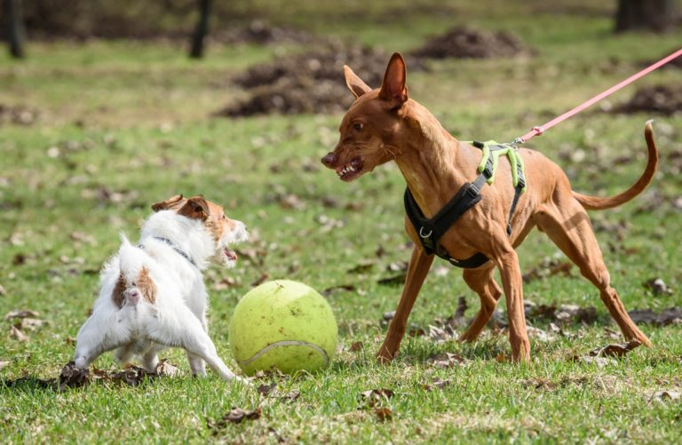 Aggressive Hunde verstehen und erziehen
