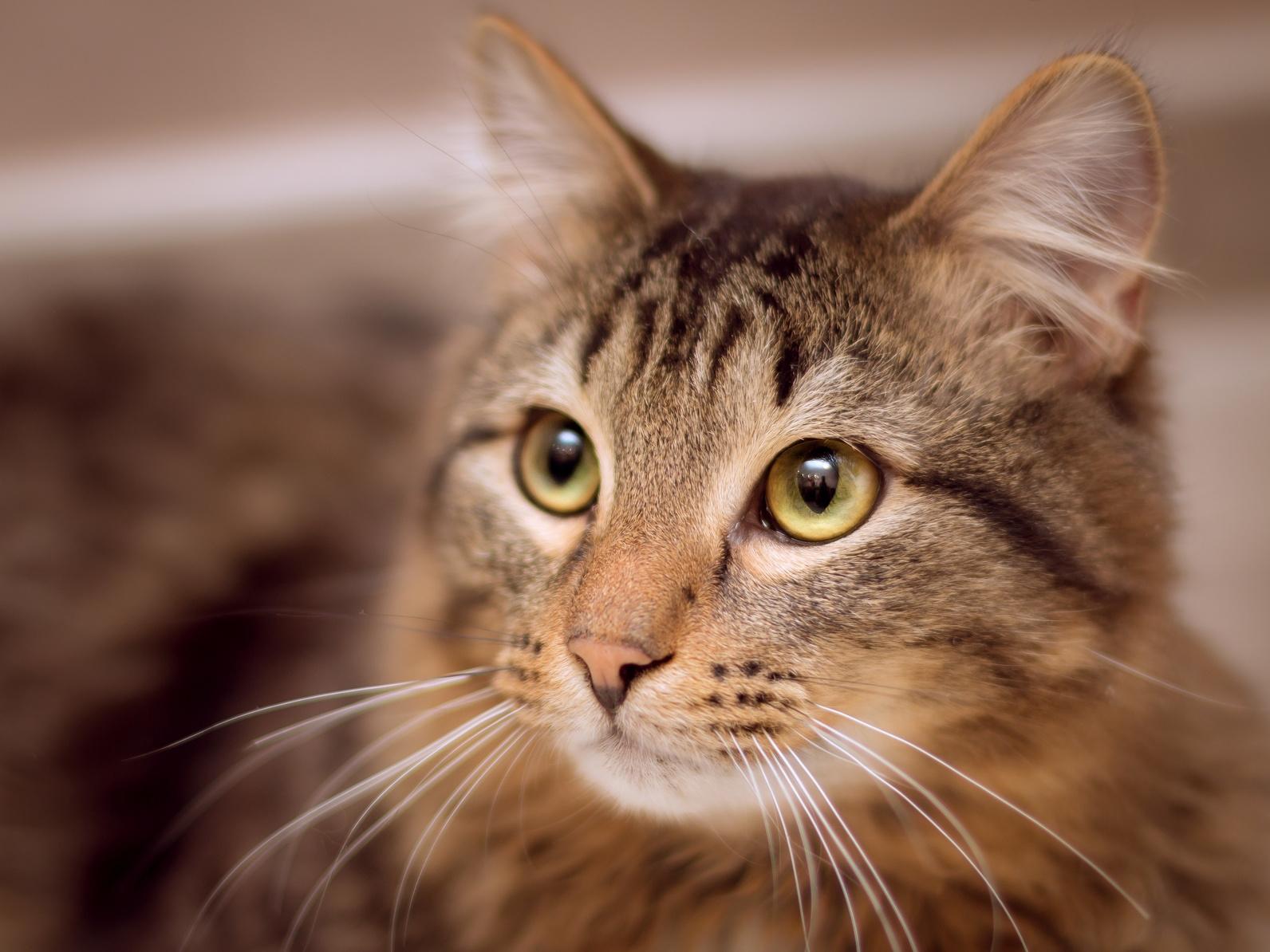 Und mit kopf katze augen wackelt Warum wackelt
