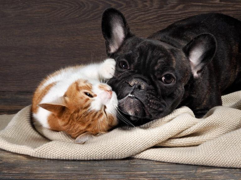 Hund und Katze kuscheln miteinander