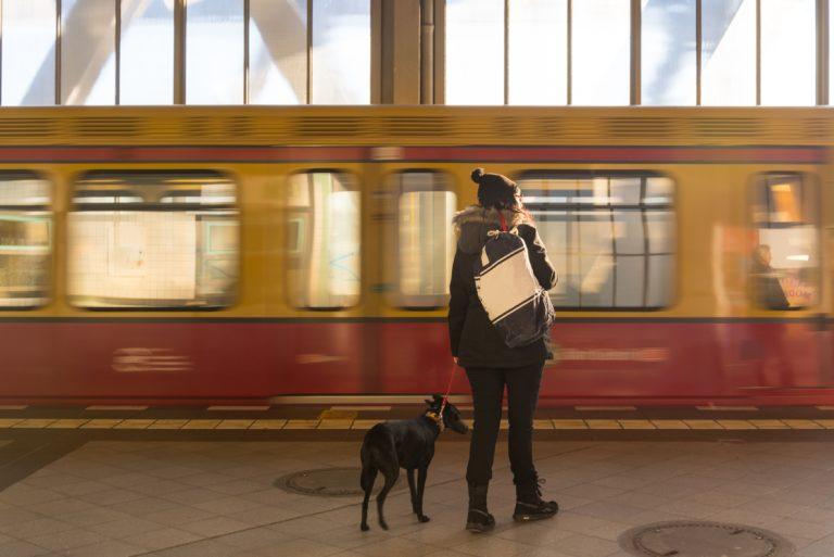 Bahn frei für Zugreisen mit Hund