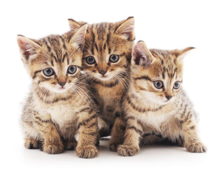 Drei Kitten aus einem Wurf