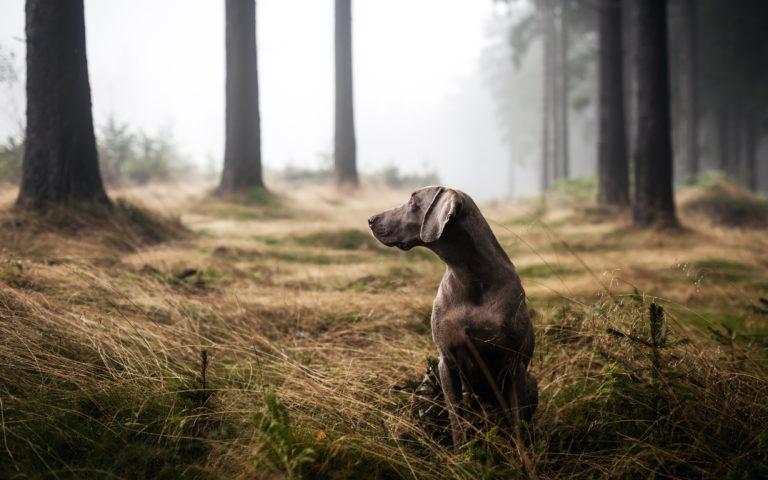 Jagdhund im Wald