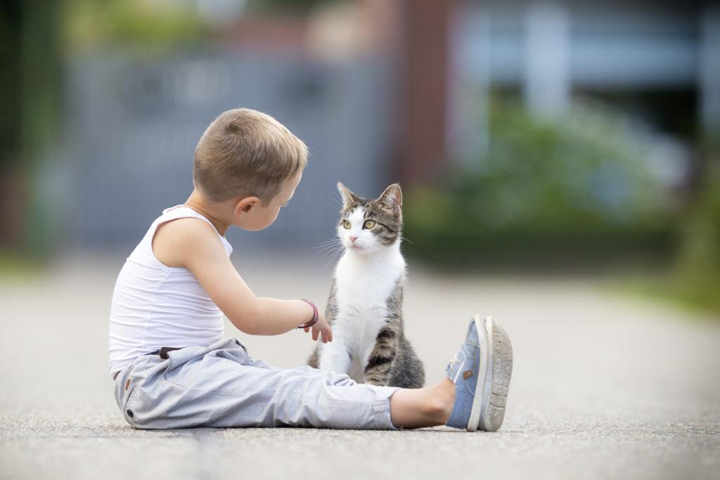 Γάτα με αγόρι