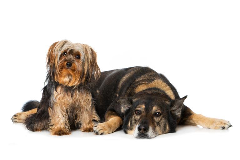 Zwei Hunde zusammen halten