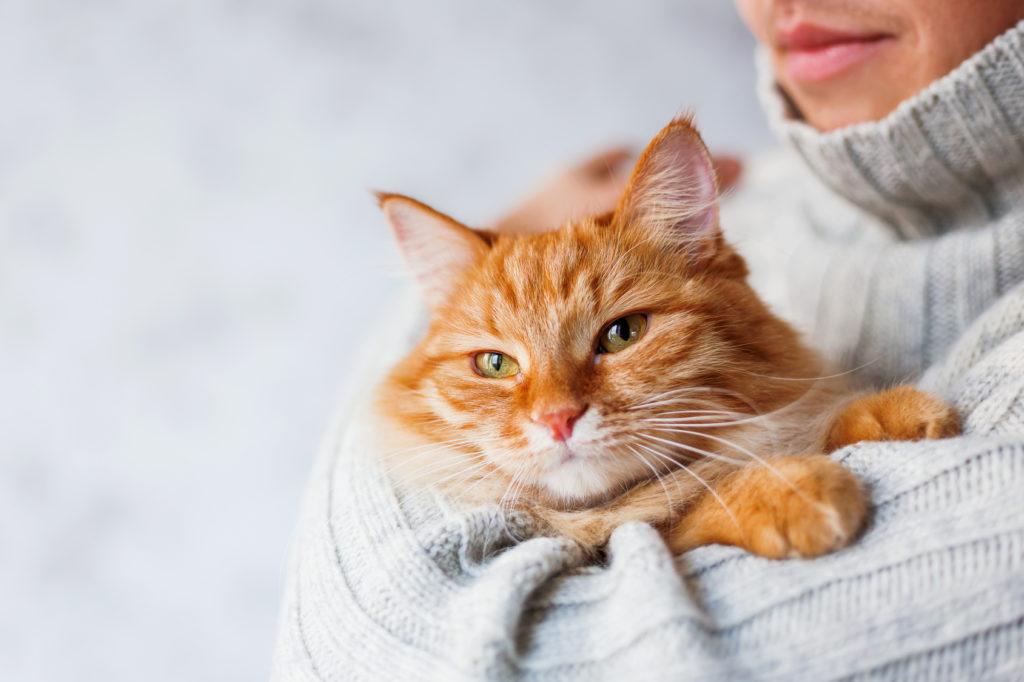 Katze auf dem Arm einer Frau