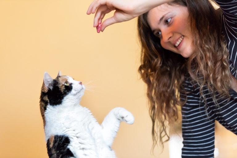 Katze übt Tricks
