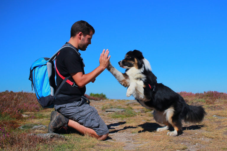 Hund macht High Five