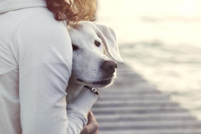 Frau beruhigt Hund mit Umarmung