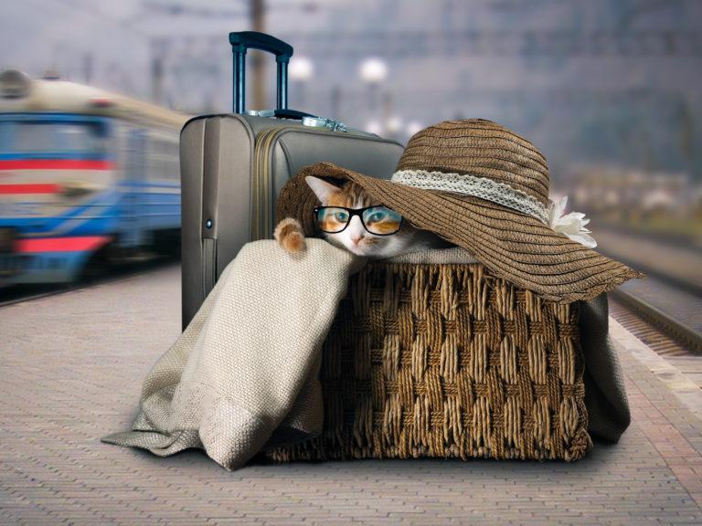 Katze in einem Körbchen auf einem Bahnsteig