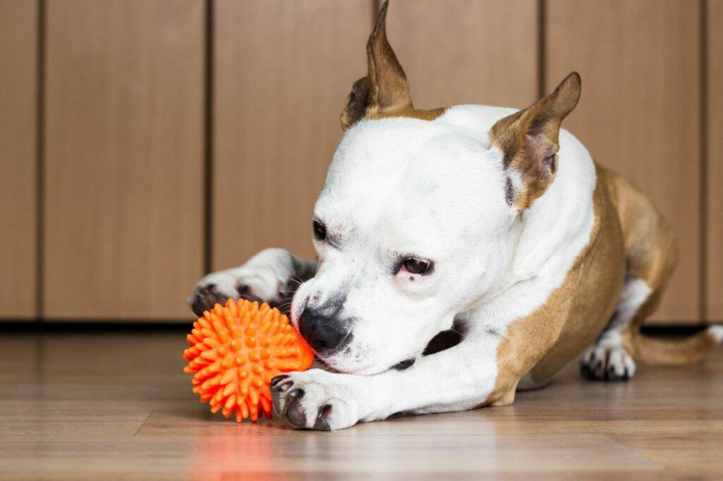 hund knabbert an spiel