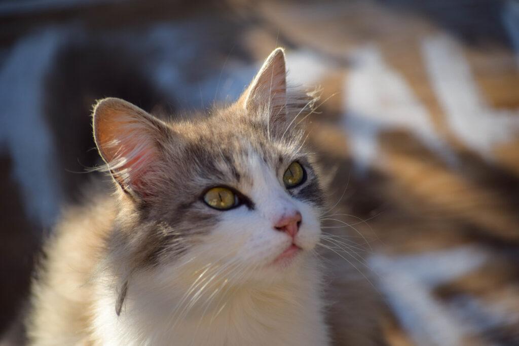 Gehhilfe Für Katzen