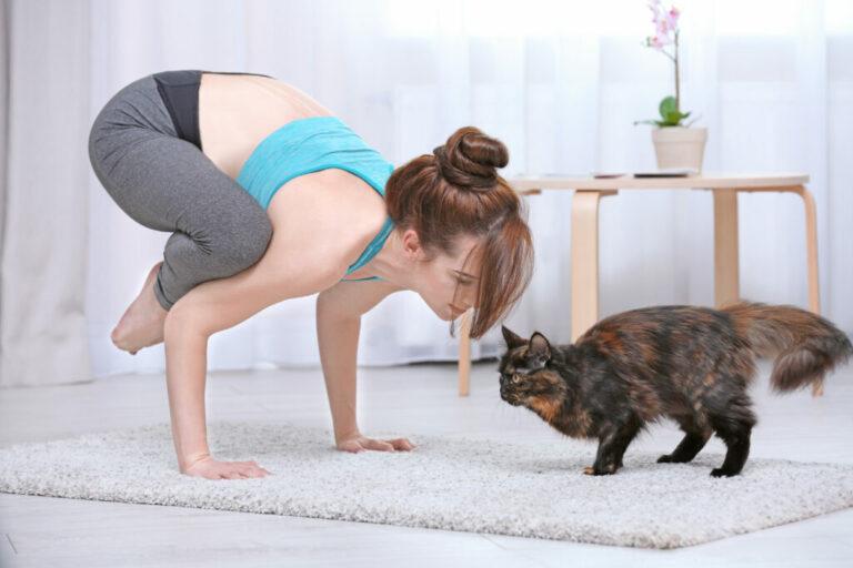 Frau macht zu Hause Yoga mit ihrer KatzeA