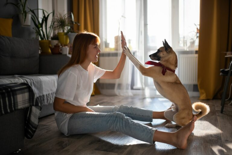mädchen übt mit hund high five im wohnzimmer