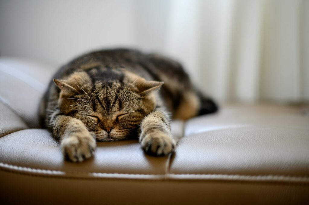 Katze entspannt auf dem Sofa.
