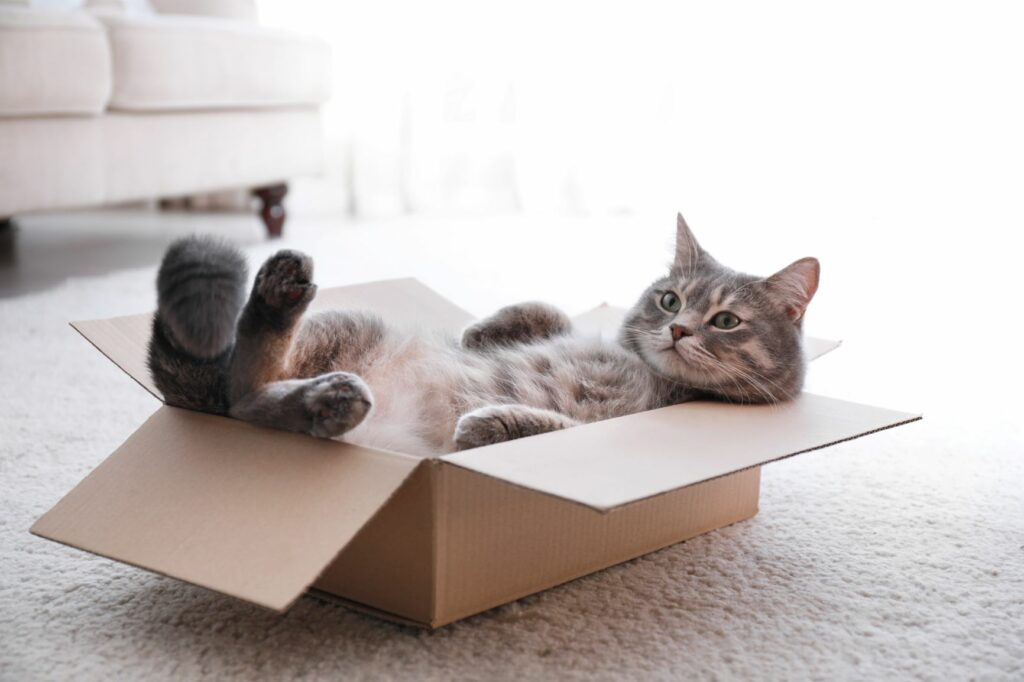 Katze liegt im Karton.