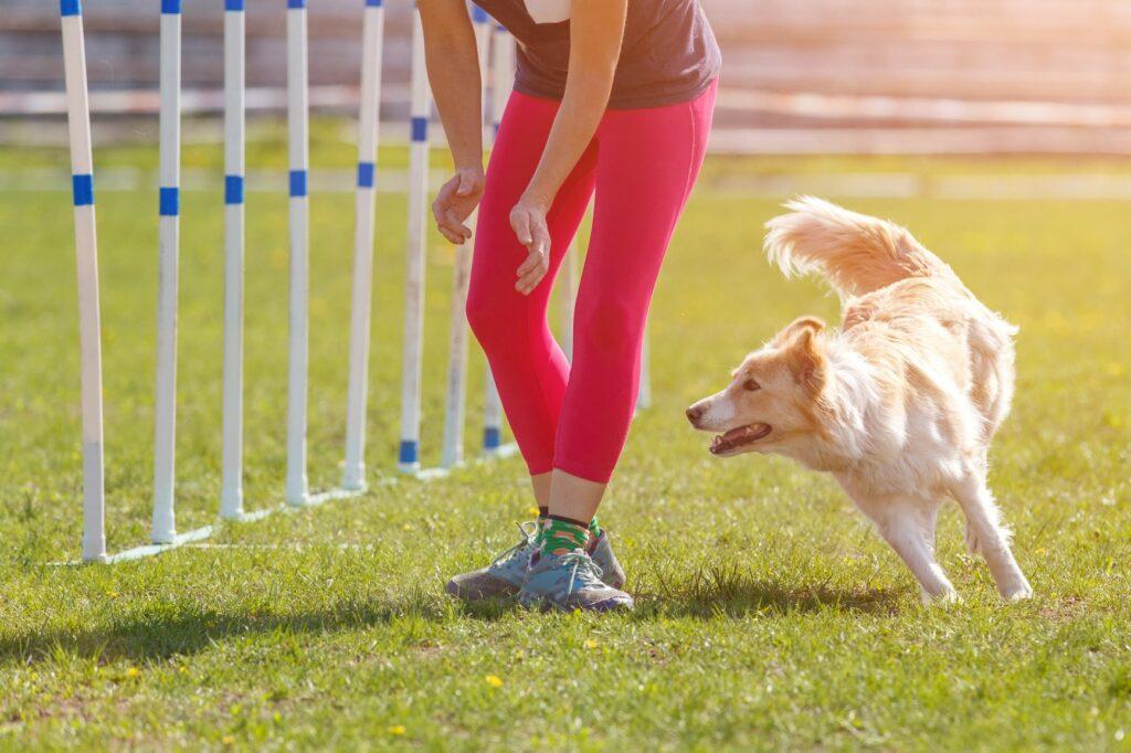 Mensch trainiert zusammen mit einem Hund