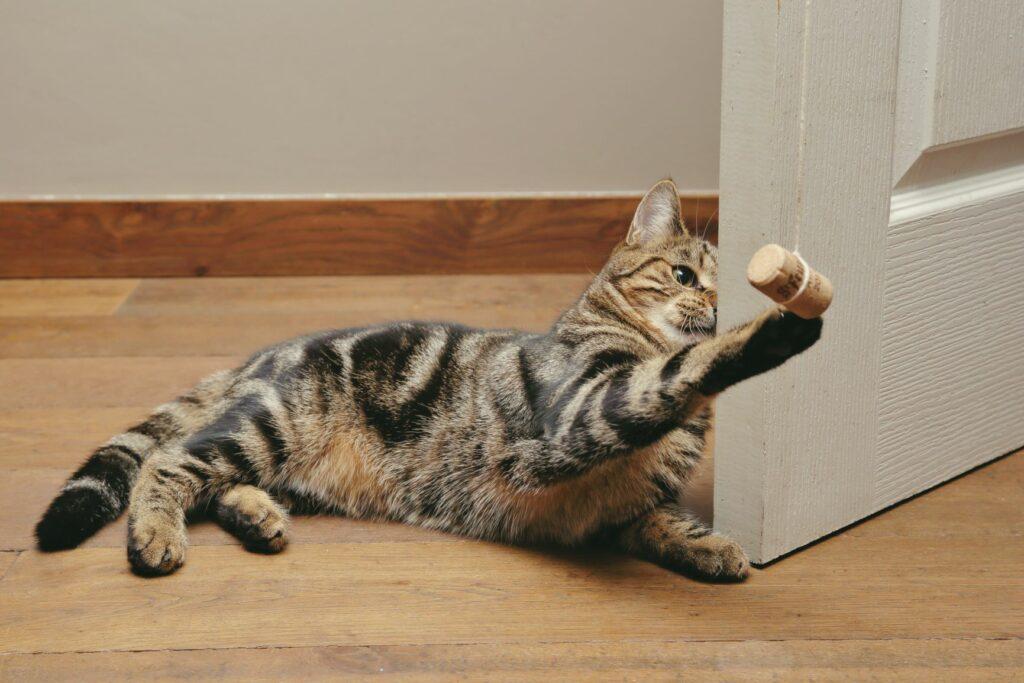 Katzenspielzeug mit einem Korken selber machen.