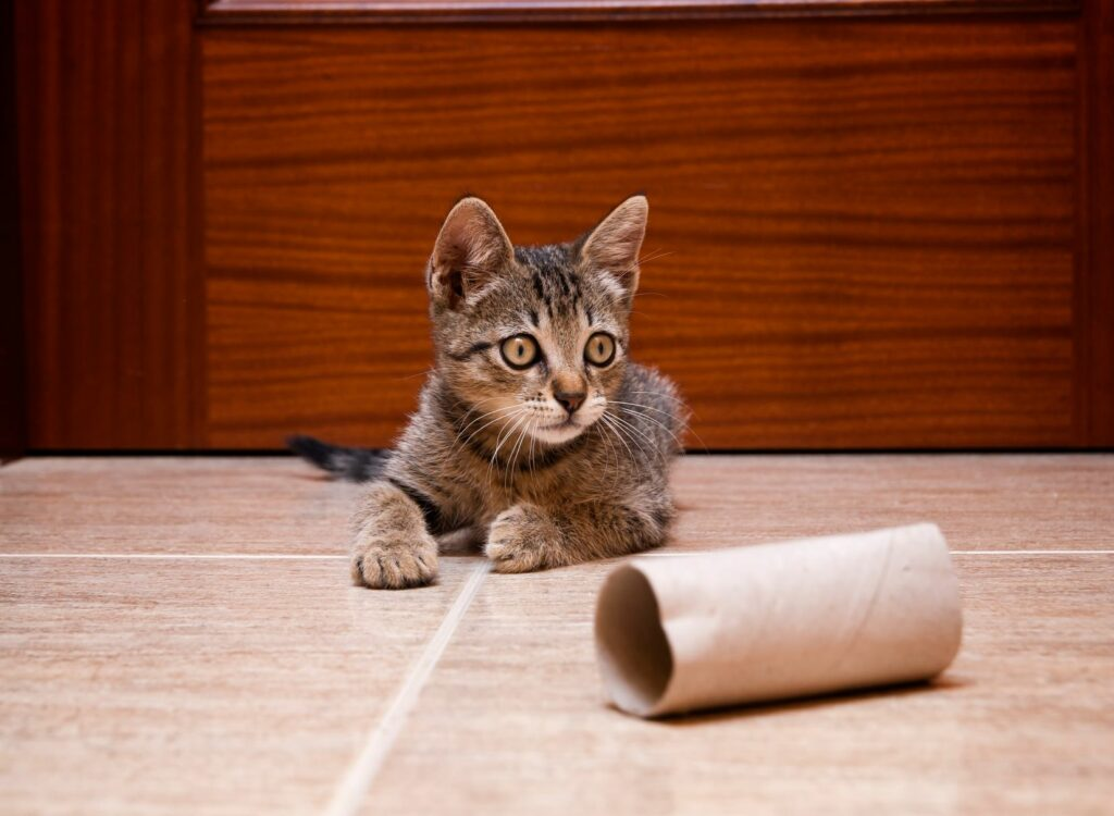 Katzenspielzeug aus Toilettenpapierrollen.