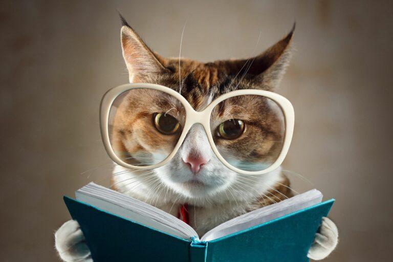 Katze mit Brille und Buch