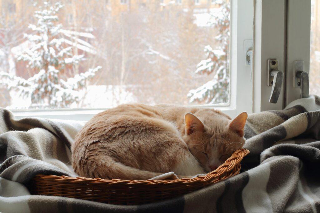 Katze liegt im Körbchen.