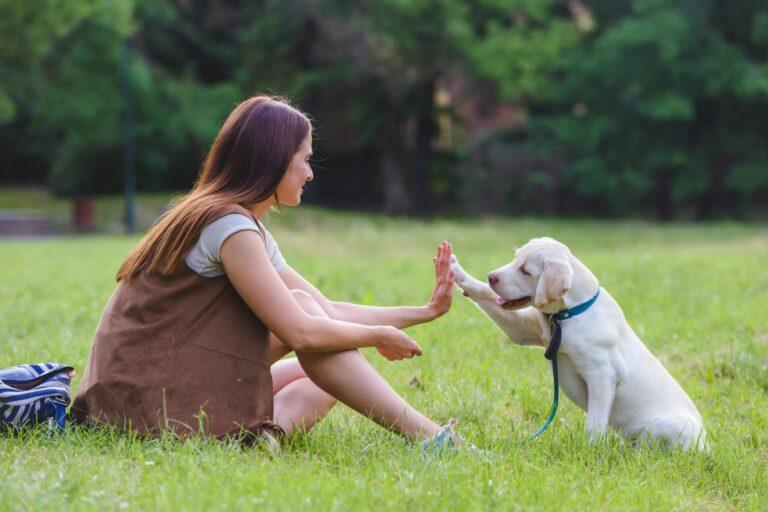 Junge Frau und Welpe im Park machen high five